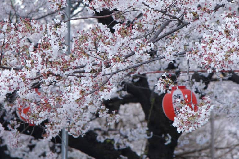 Blossom Lanterns