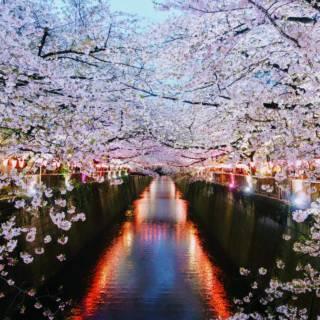 Nakameguro Cherry Blossom Festival