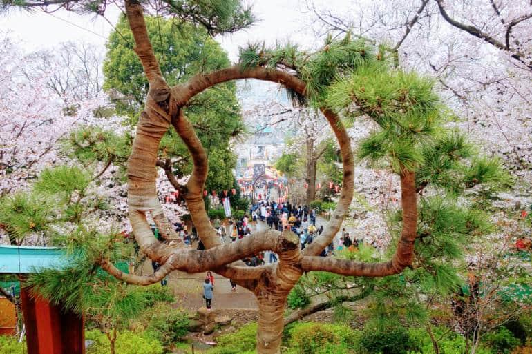 Ueno Blossom