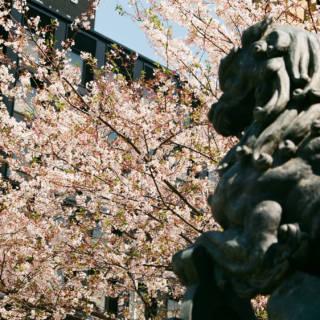 Nihonbashi Sakura Festival: A Digital Gourmet Wonderland