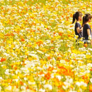 Showa Kinen Flower Festival