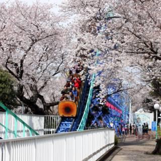 Toshimaen Sakura Matsuri