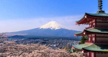 Fuji Blossom