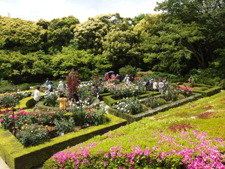 rose garden kyu-furukawa teien gardens