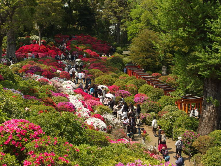 azaleas nezu shrine bunkyo