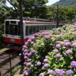 hakone ajisai train