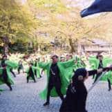 Takao Wakaba Festival