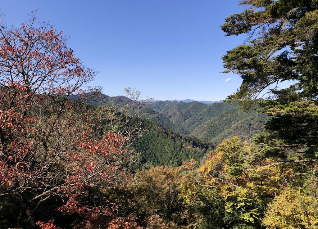 autumn leaves on mt takao