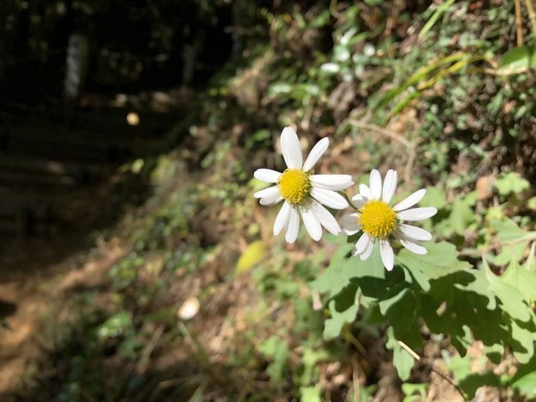 wild flowers on mt takao