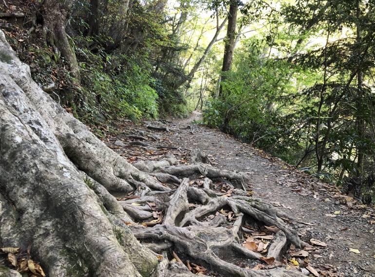 tree roots on path on mt takao