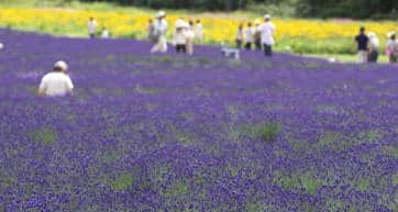 Tambara Lavender Park