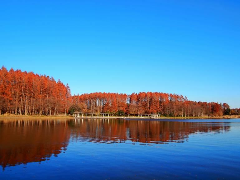Mizumoto autumn foliage