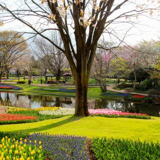 Showa Kinen Park (Showa Memorial Park)