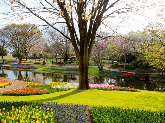(Showa Memorial Park Tachikawa