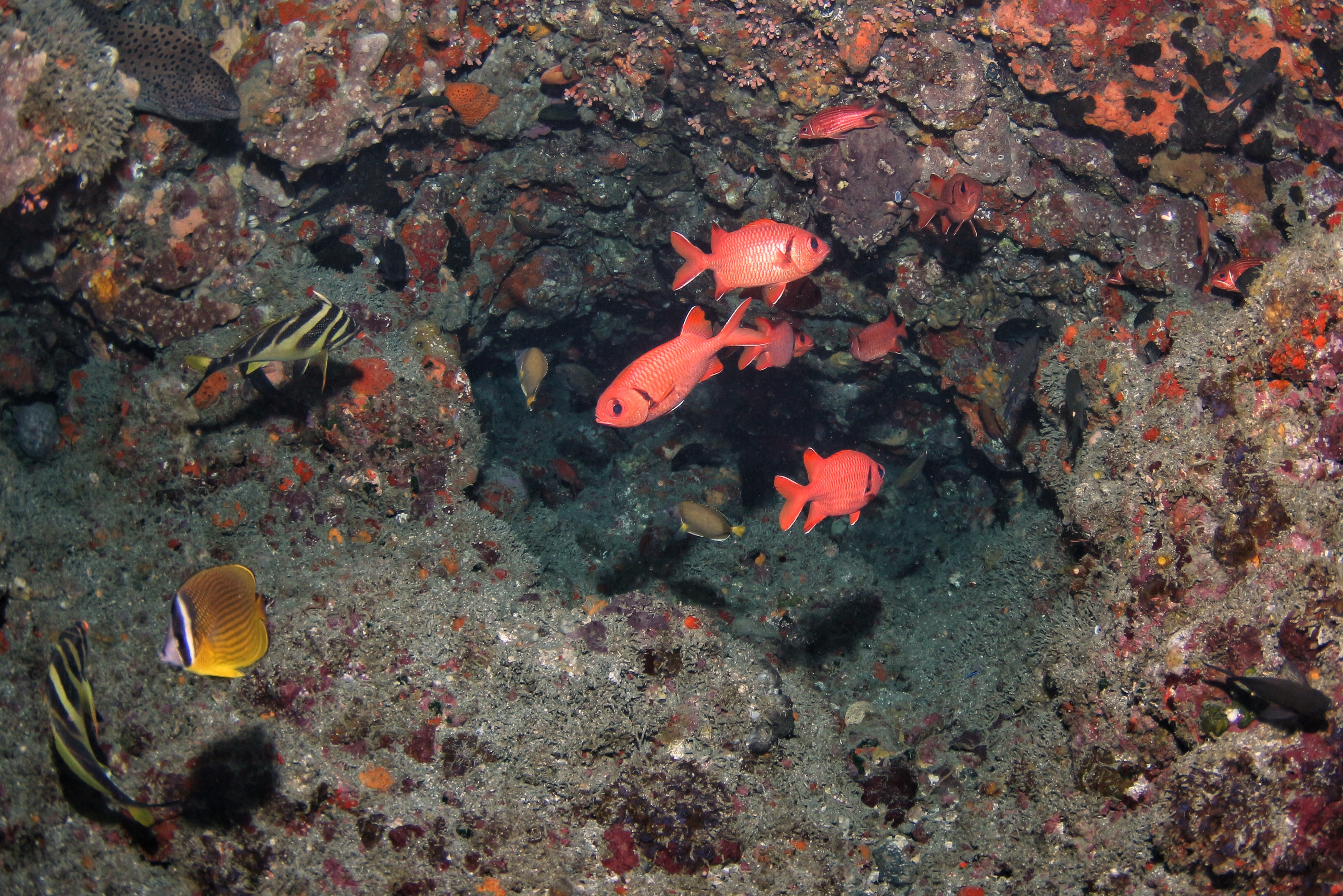 tokyo diving day trips