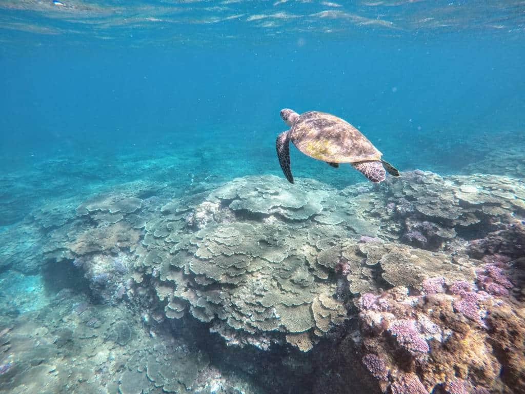 Hachijojima snorkeling