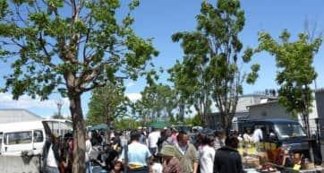 Ajinomoto Flea Market