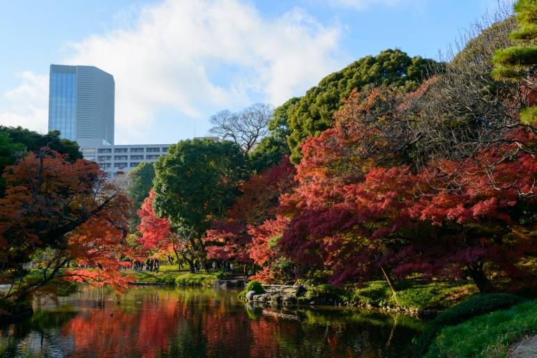 Koishikawa Korakuen Garden in Autumn