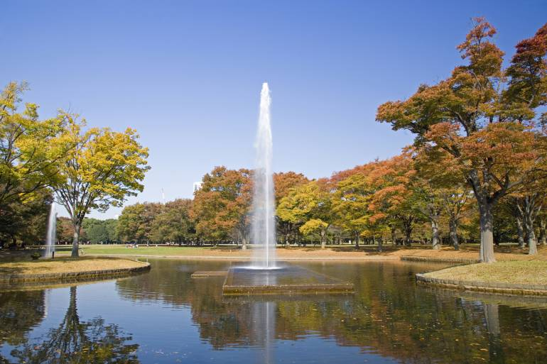 Autumn in the Yoyogi Park