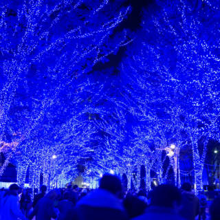 Shibuya Blue Cave Illuminations