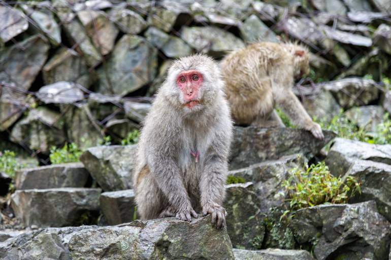 Monkey next to a hot spring in summer