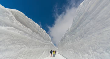 tateyama alpine route snow wall