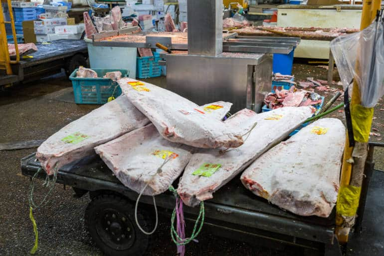 adachi market fish