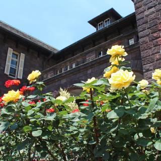 Autumn Rose Festival