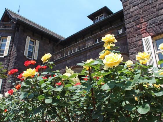 roses at Furukawa Garden