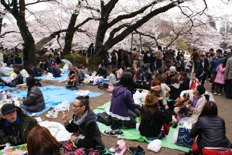 tokyo hanami parties how to join
