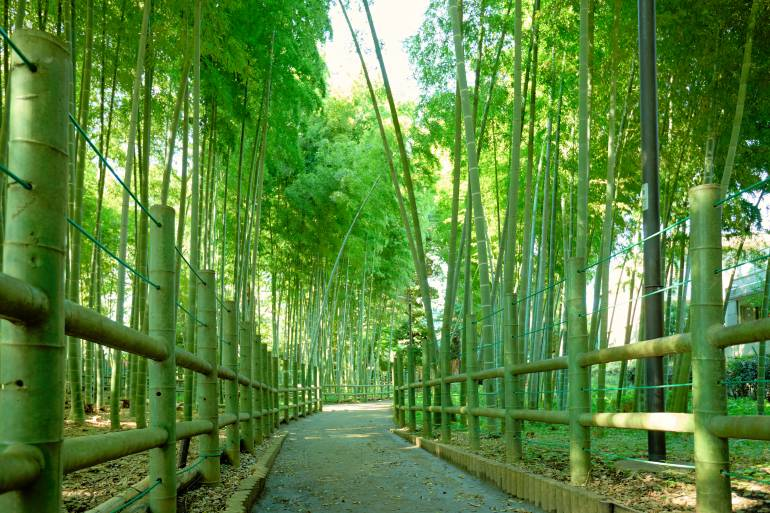 tokyo bamboo path