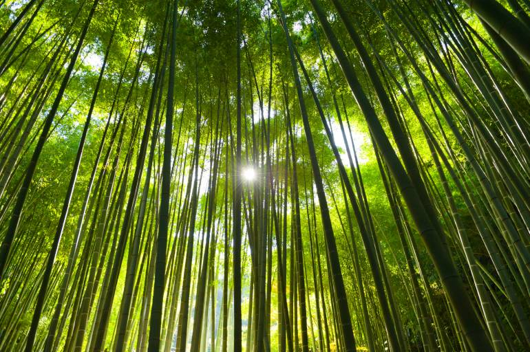 tokyo bamboo