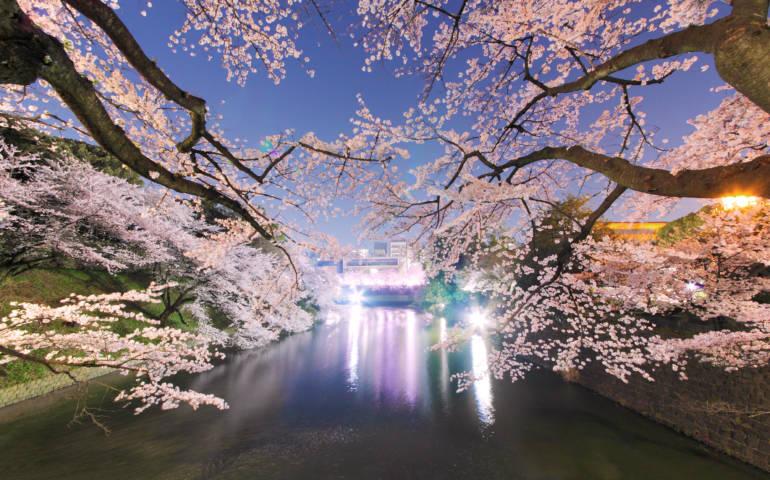 chidorigafuchi tokyo cherry blossom sakura
