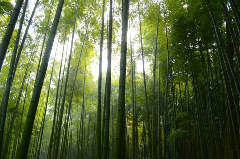 bamboo forest tokyo