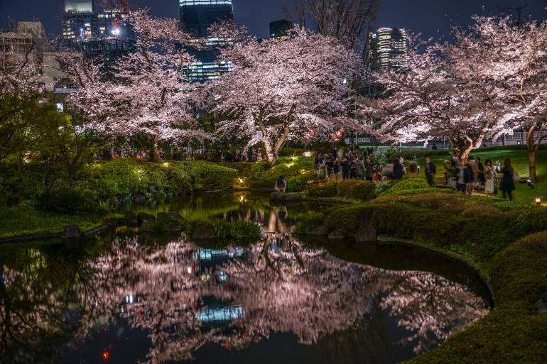 Cherry trees illuminated at night next to Roppongi Hills