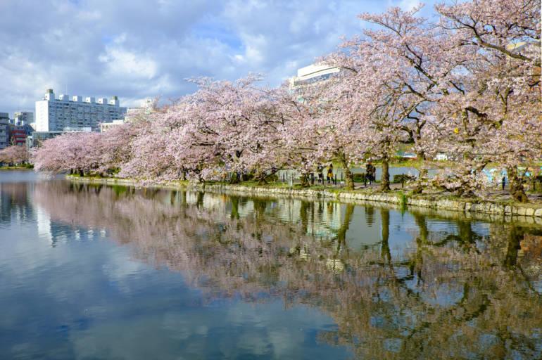 tokyo cherry blossom sakura ueno park