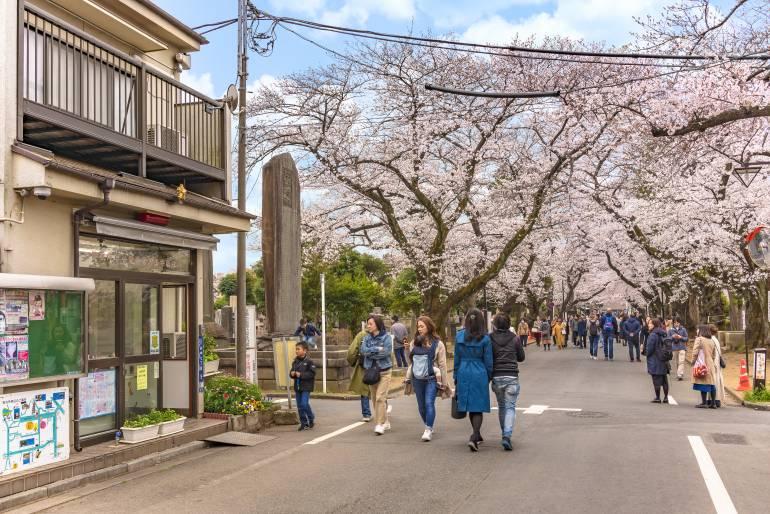 Cherry blossoms yanaka cemetery