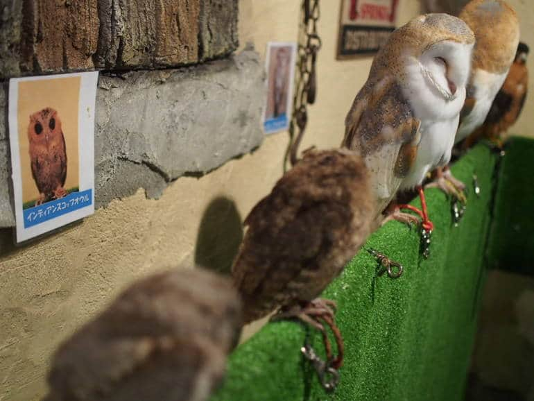 tokyo owl cafe