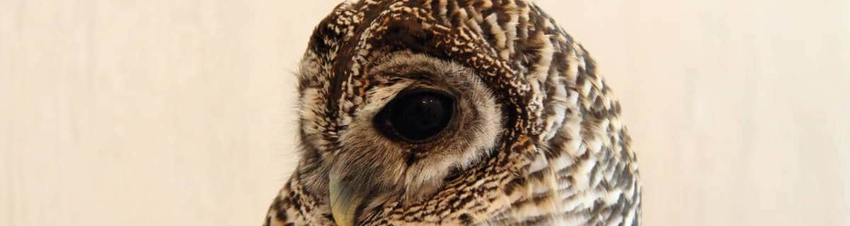 Kind Travel: Explore These Alternatives to Owl Cafés in Tokyo