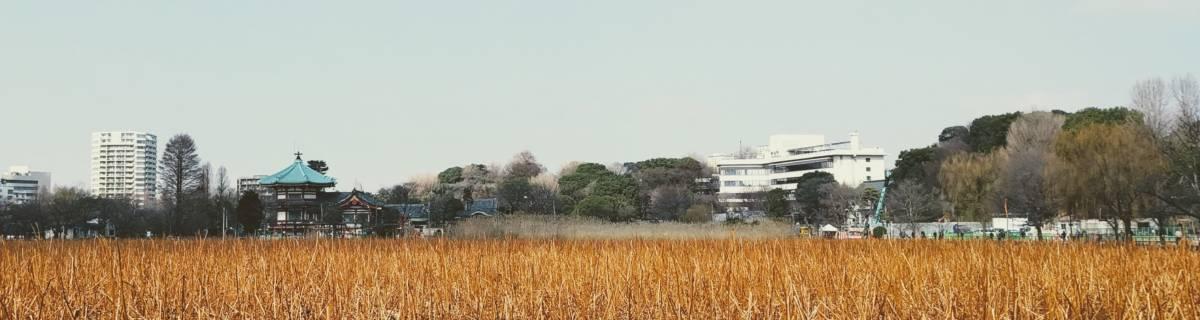 Cheapo Half-Day Walking Tour: Ueno