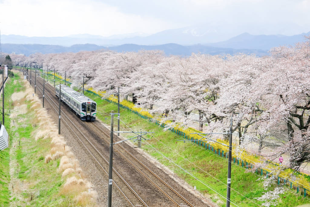 JR train in spring