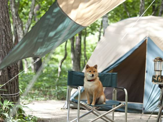 dog in front of a tent