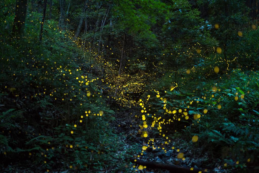 firefly festival tokyo