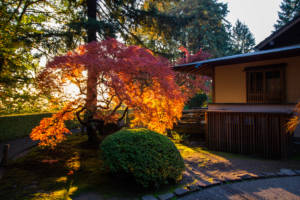 unusual airbnb tokyo japanese garden