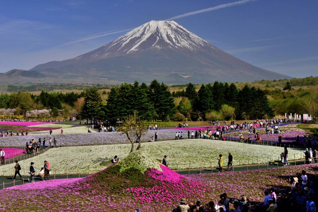 Mt Fuji and Moss Phlox