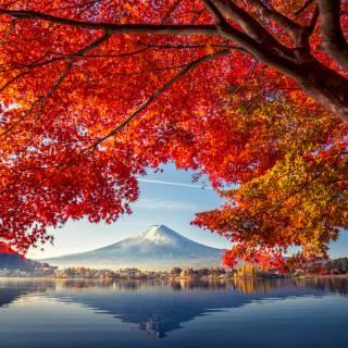 Fuji-Kawaguchiko Fall Leaves Festival