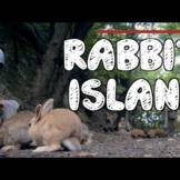 Visiting Okunoshima - Japan's Famous Rabbit Island