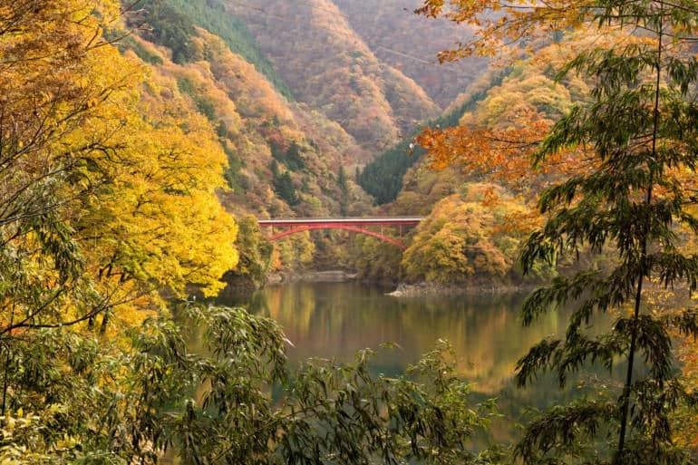 Okutama autumn leaves
