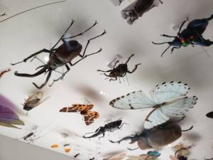 Insect Day - Tokyo Event