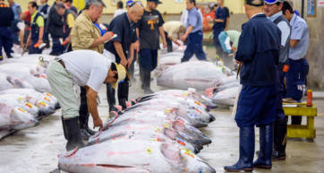 The Tsukiji tuna auction has moved to the new Toyosu Fish Market
